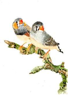 This Zebra finch drawing looks cute and I think it would be good.