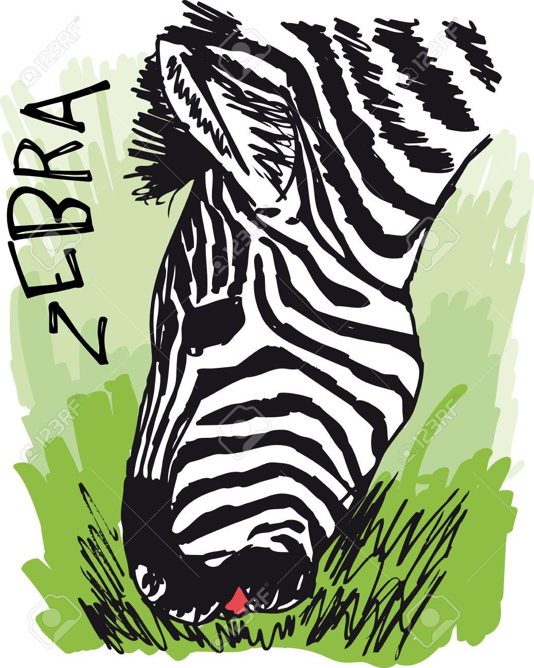 Zebra Eating Grass. Illustration Royalty Free Cliparts, Vectors.