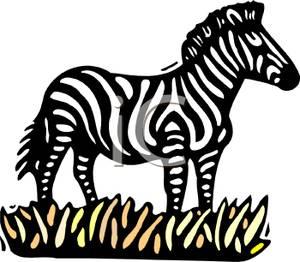 Zebra Standing In Grass Clipart Picture.