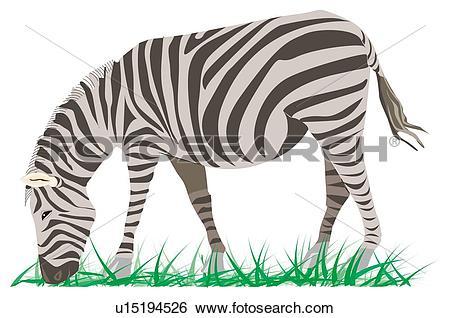 Stock Illustration of Zebra eating grass, side view u15194526.