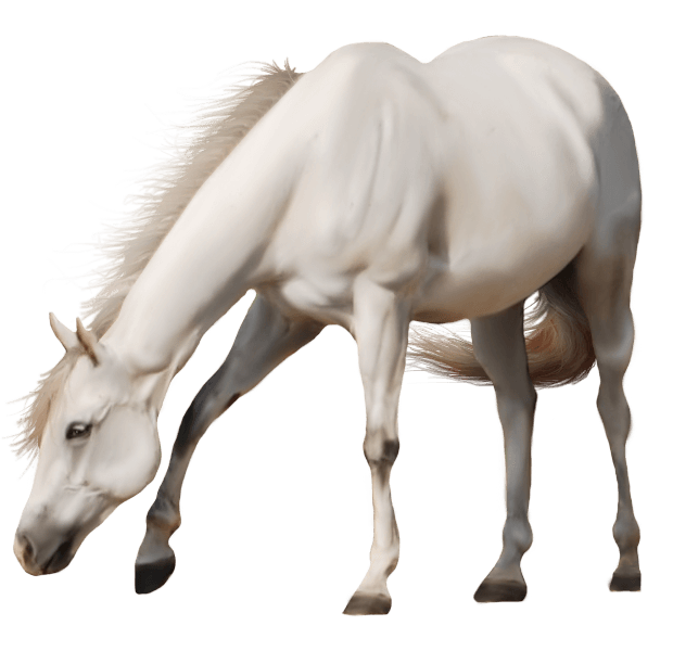 Download Horse Free PNG photo images and clipart.