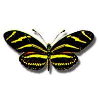 Butterflies and Butterfly Gardening.