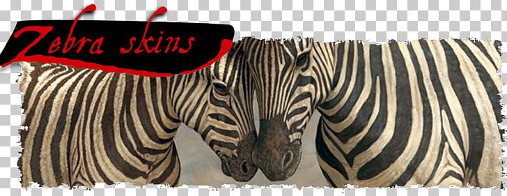 Zebra Animal Horse White, Zebra Skin PNG clipart.