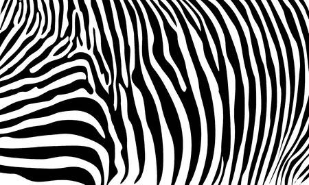 9,900 Zebra Stripes Stock Illustrations, Cliparts And Royalty Free.