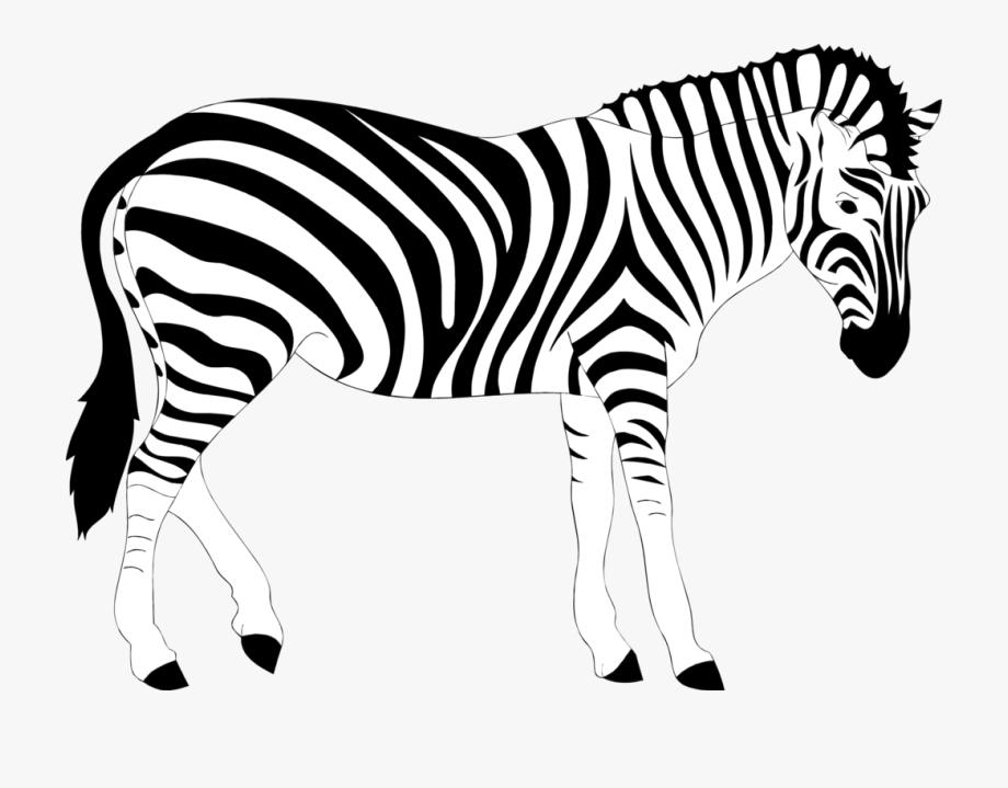 Zebra Clipart Realistic Pencil And In Color Zebra.