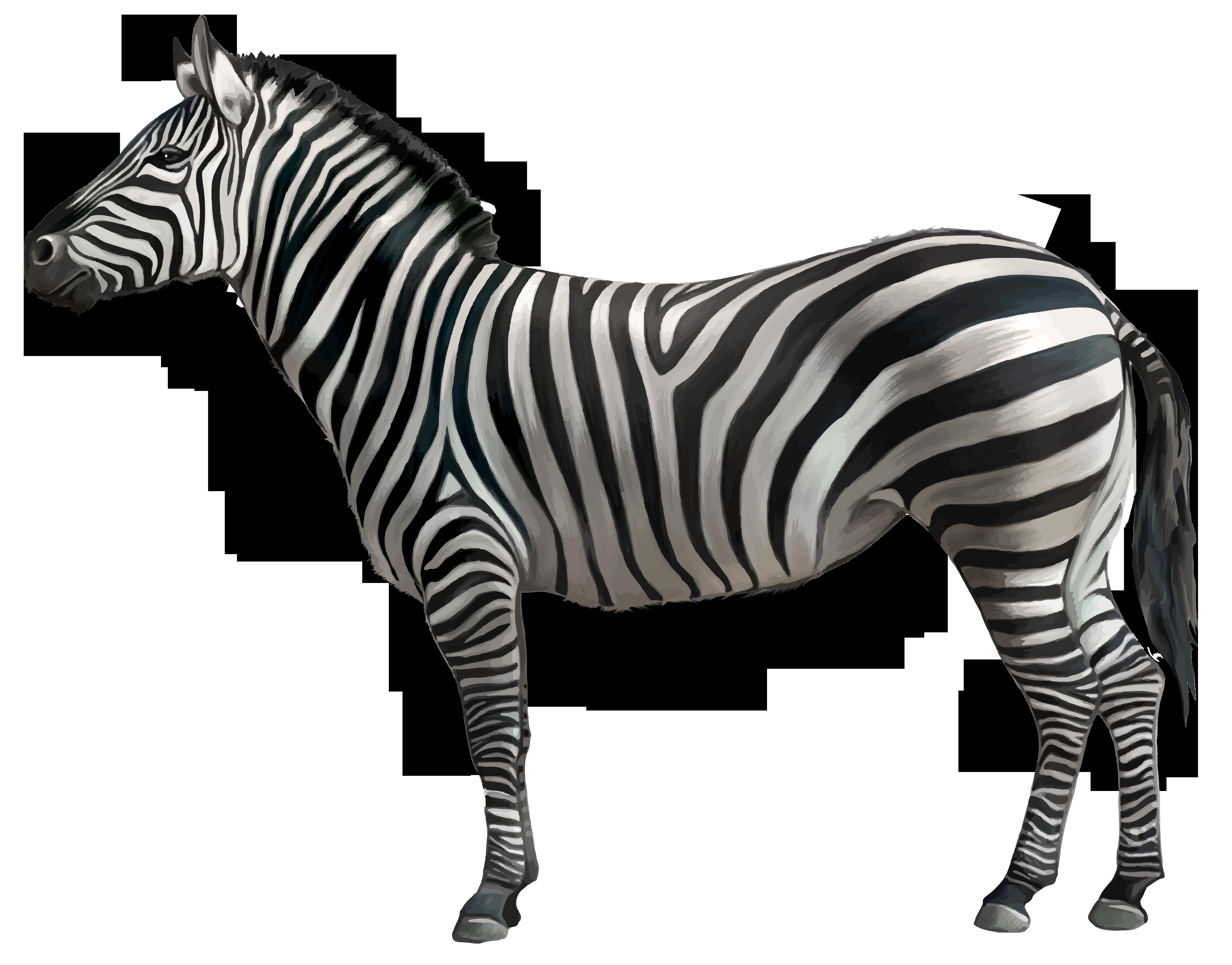 Zebra PNG Clipart Image.