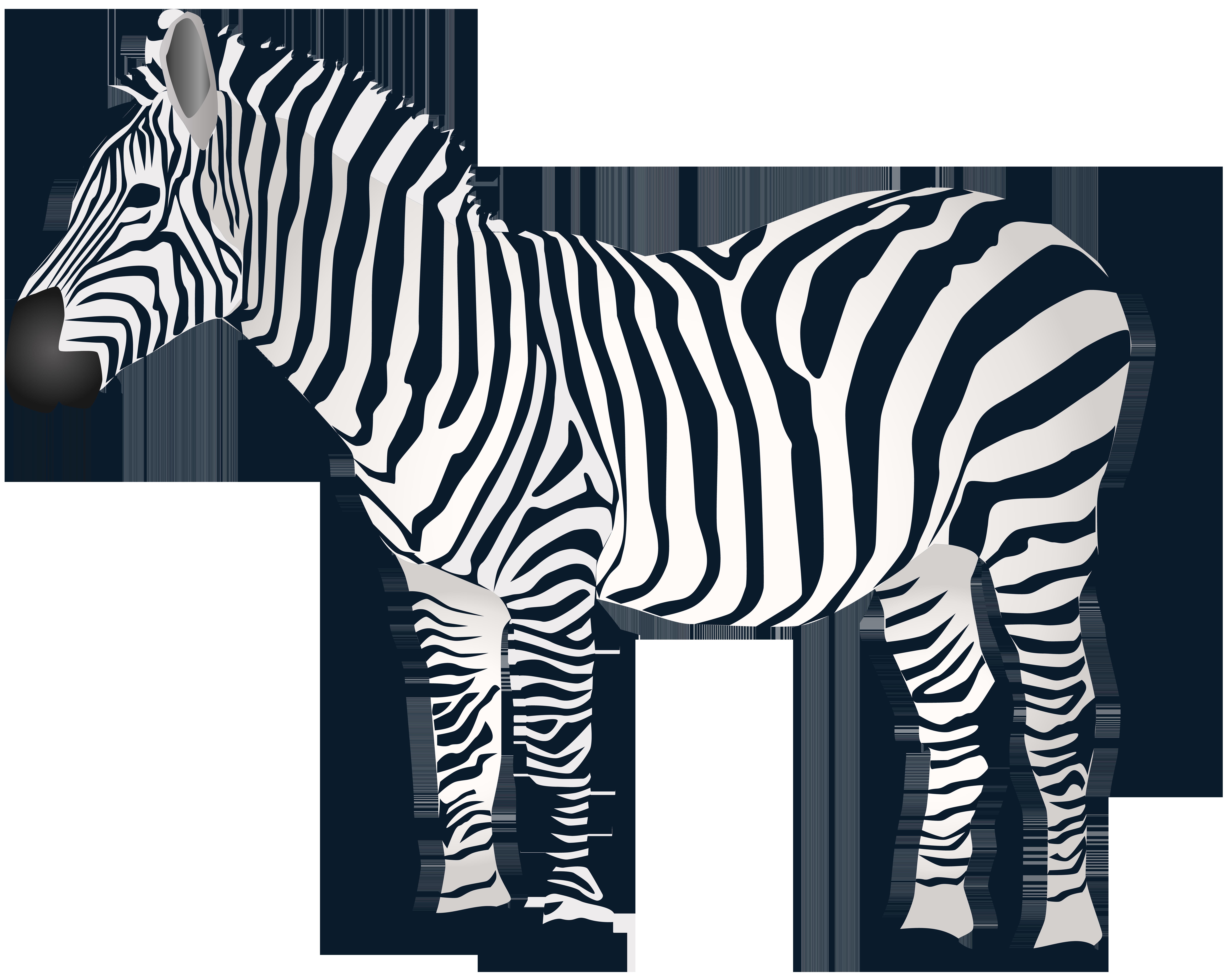 Zebra PNG Clip Art.