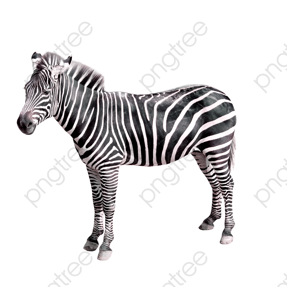 Zebra, Zebra Clipart, Animal PNG Transparent Image and Clipart for.