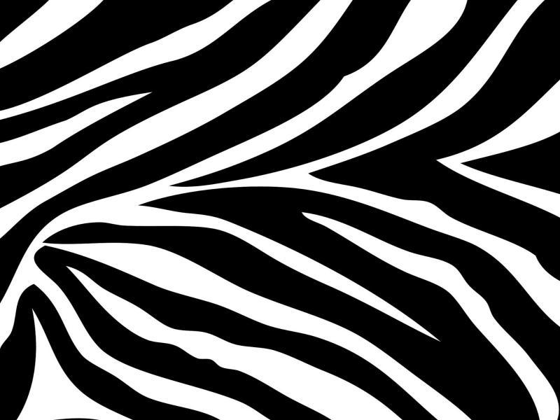 And White Zebra Print Wall Border & Border Clip Art.