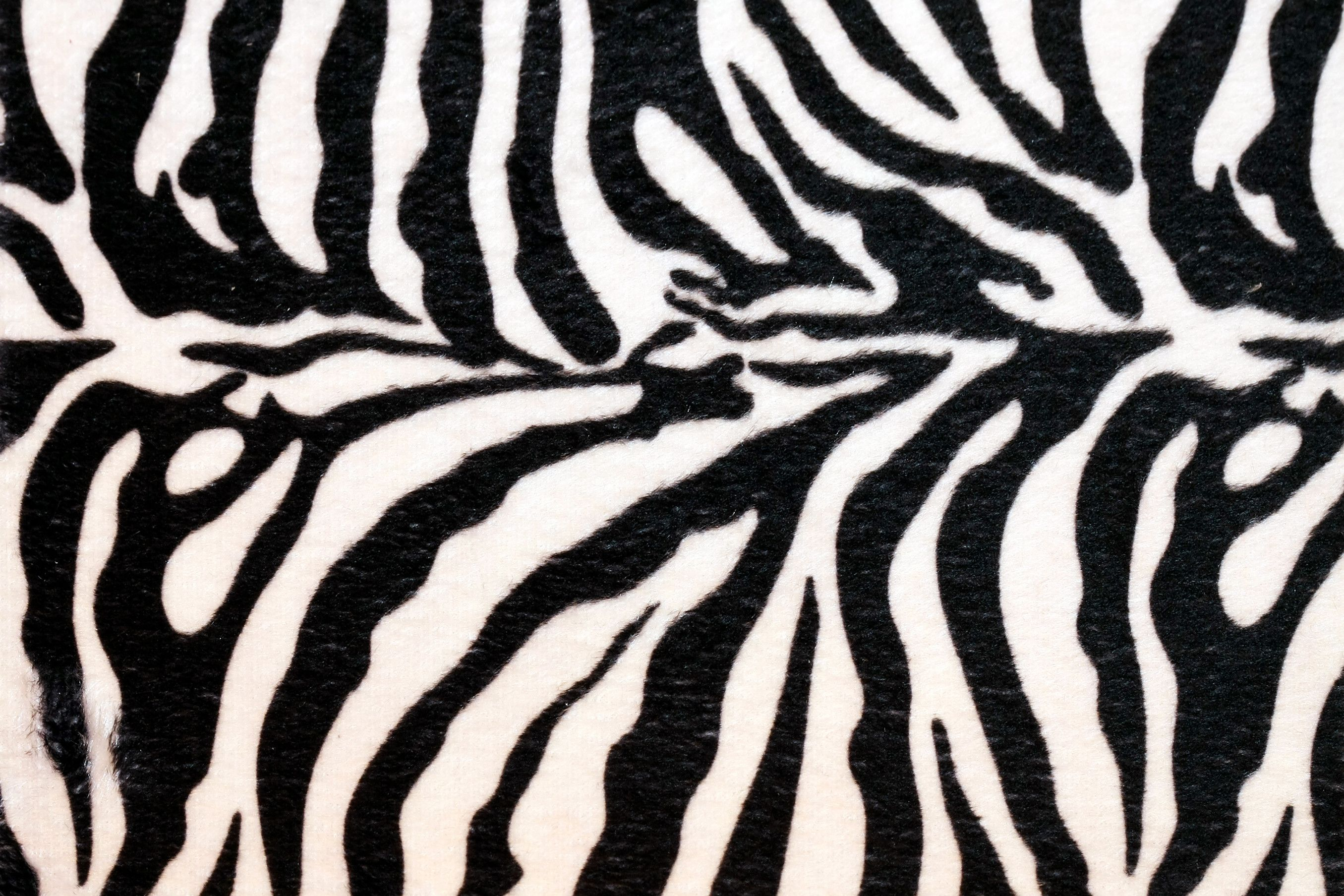 Pin by Aleczandra Seocanac on Zebra stuff.