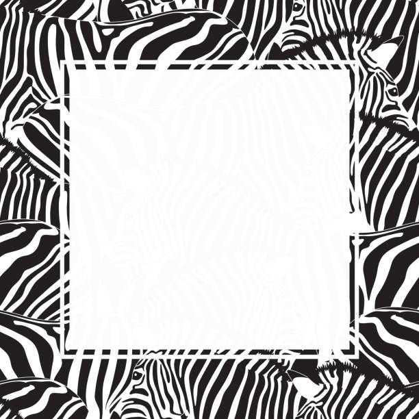 Best Zebra Frame Illustrations, Royalty.