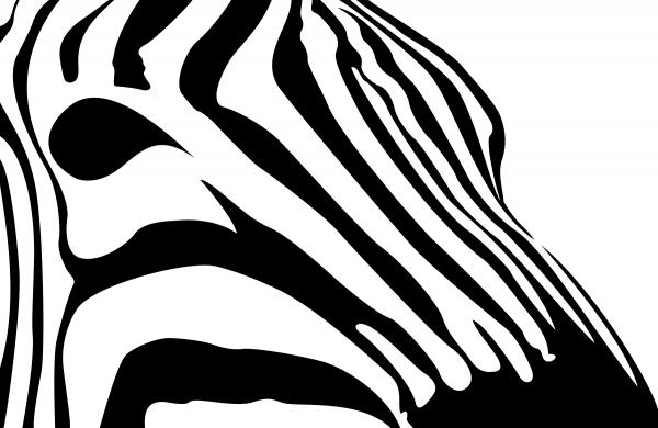 Zebra Profile.
