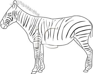 Black_and_White_Zebra_Profile_Royalty_Free_Clipart_Picture_110326.