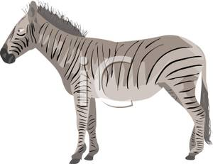 Zebra_Profile_Royalty_Free_Clipart_Picture_110326.