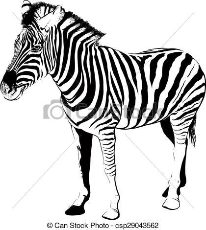 Clip Art Vector of Zebra in profile.