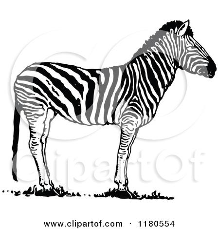 Clipart of a Retro Vintage Black and White Zebra in Profile.