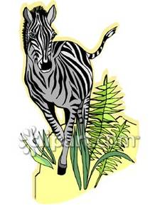 Zebra Running Through Ferns.