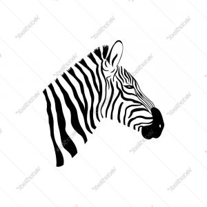Black And White Zebra Portrait With Side View Vector.