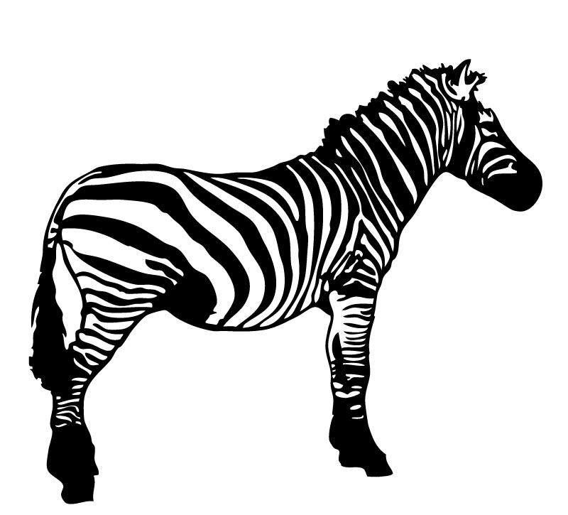 Black And White Cartoon Zebra.