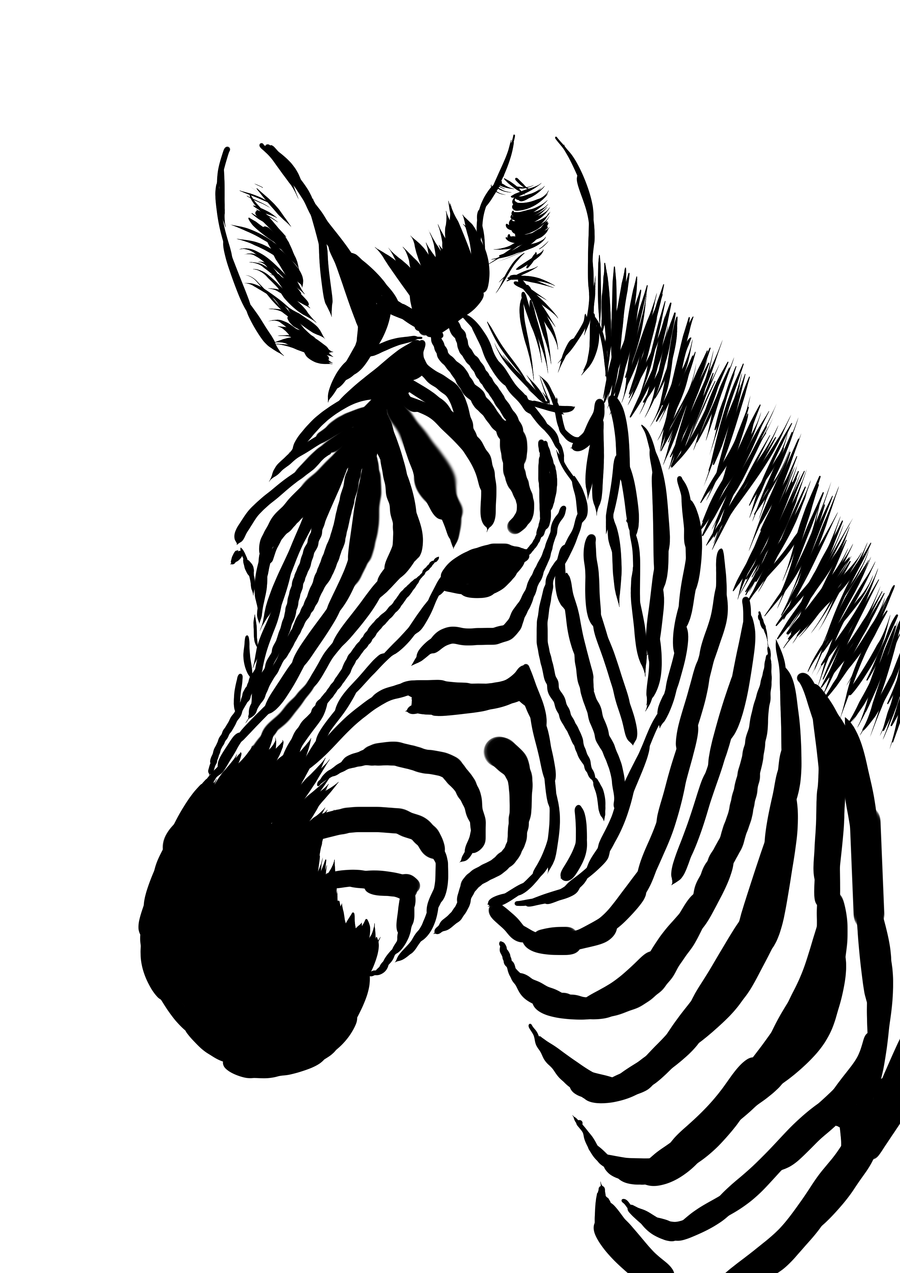 Zebra Face Pictures.