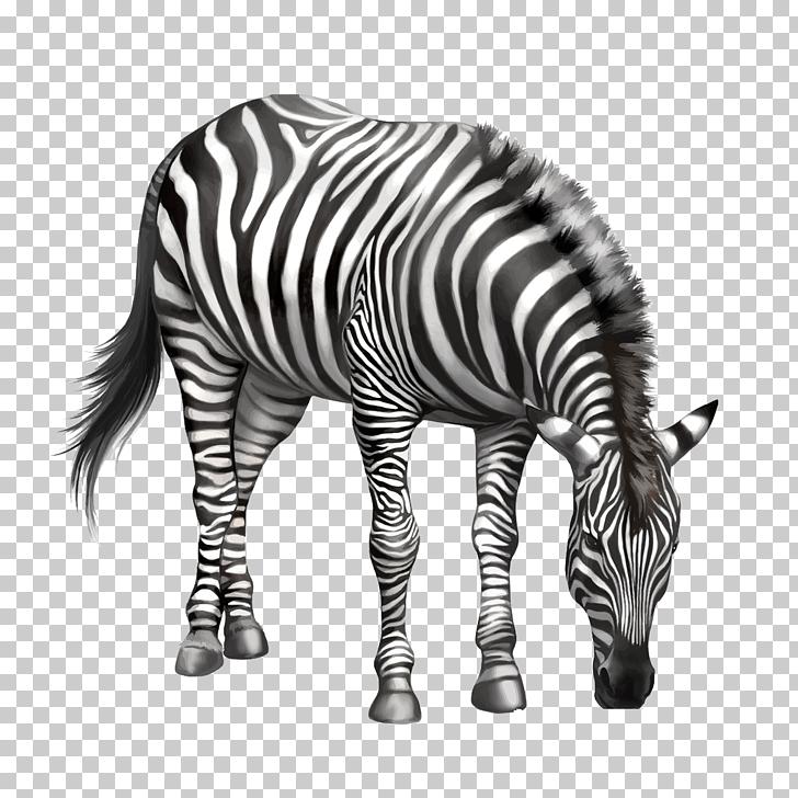 Zebra Drawing , Eating zebra bow, zebra PNG clipart.