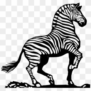 Zebra African Zebra Striped Zebra.