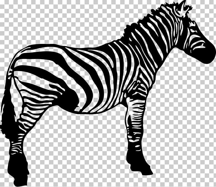 Zebra Black and white Stripe , zebra PNG clipart.