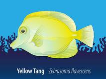 Zebrasoma Flavescens Yellow Tang Stock Illustrations.
