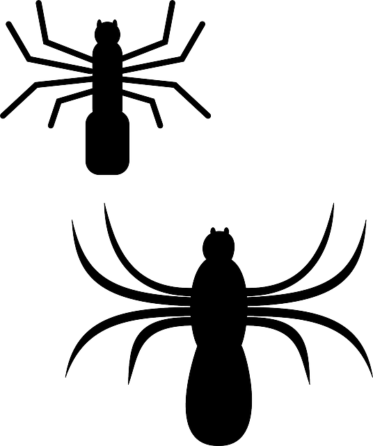 Free vector graphic: Spider, Silhouette, Bugs, Insect.