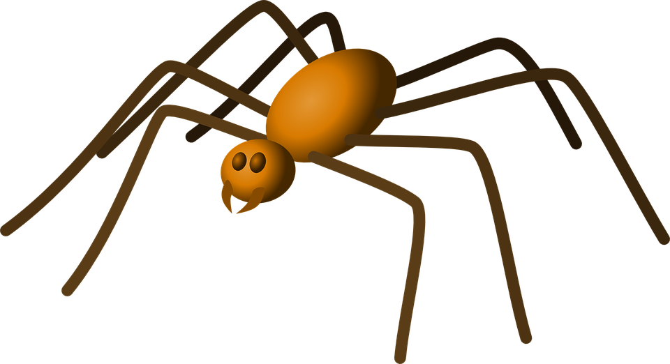 Free vector graphic: Spider, Insect, Bug, Crawling.