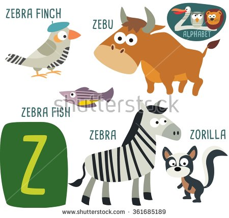 Zebu Stock Photos, Royalty.