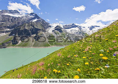 Pictures of Flowers at lakeside, Hohe Tauern, Alps, Mooserboden.