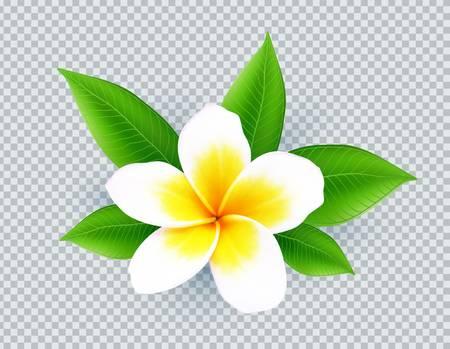 107 Aloha Zen Stock Vector Illustration And Royalty Free Aloha Zen.