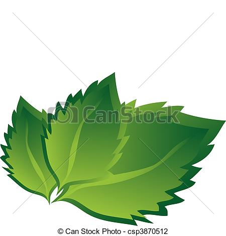 Vector Illustration of birch leaves.
