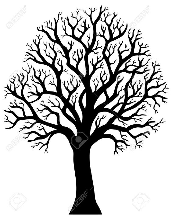 Silhouette Of Tree Without Leaf.