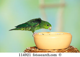 Ziervogel Stock Photo Images. 28 ziervogel royalty free images and.