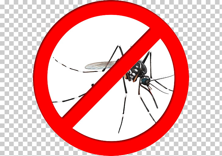 Yellow fever mosquito Insect Mosquito control Fly Zika virus.