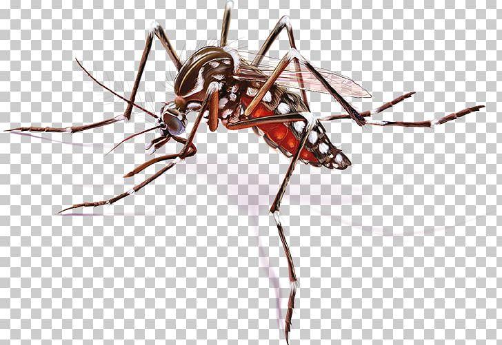 Yellow Fever Mosquito Zika Virus Zika Fever Disease PNG, Clipart.