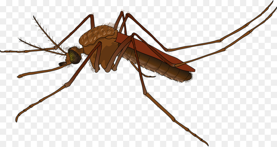 Mosquito Control Insect png download.