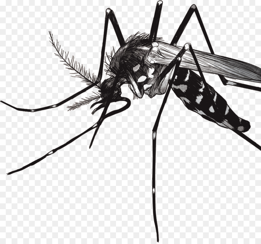 Mosquito Fly png download.
