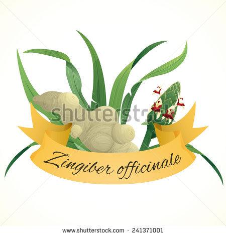 Zingiber Stock Photos, Royalty.