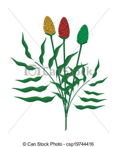 Vector Clip Art of Fresh Zingiber Zerumbet Plant on White.