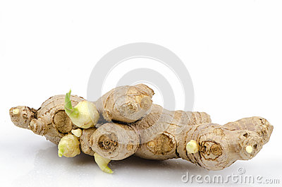 Zingiber Officinale Stock Photo.