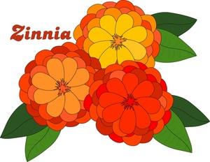 Zinnia clipart - Clipg...