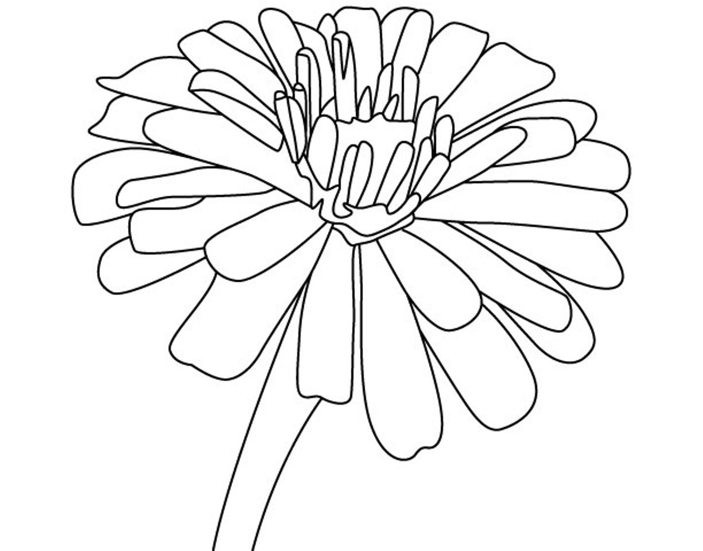 Free Zinnia Flower Coloring Page.