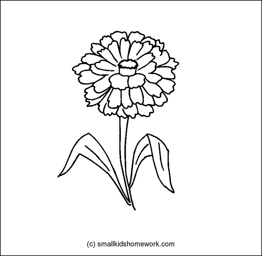 Zinnia Flower Clipart.
