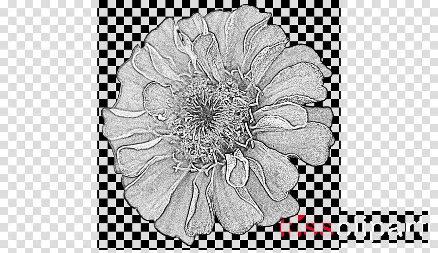 flower white petal black.