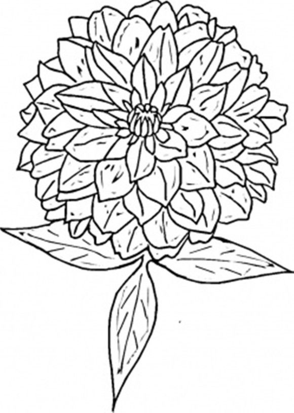 The best free Zinnias coloring page images. Download from 6.