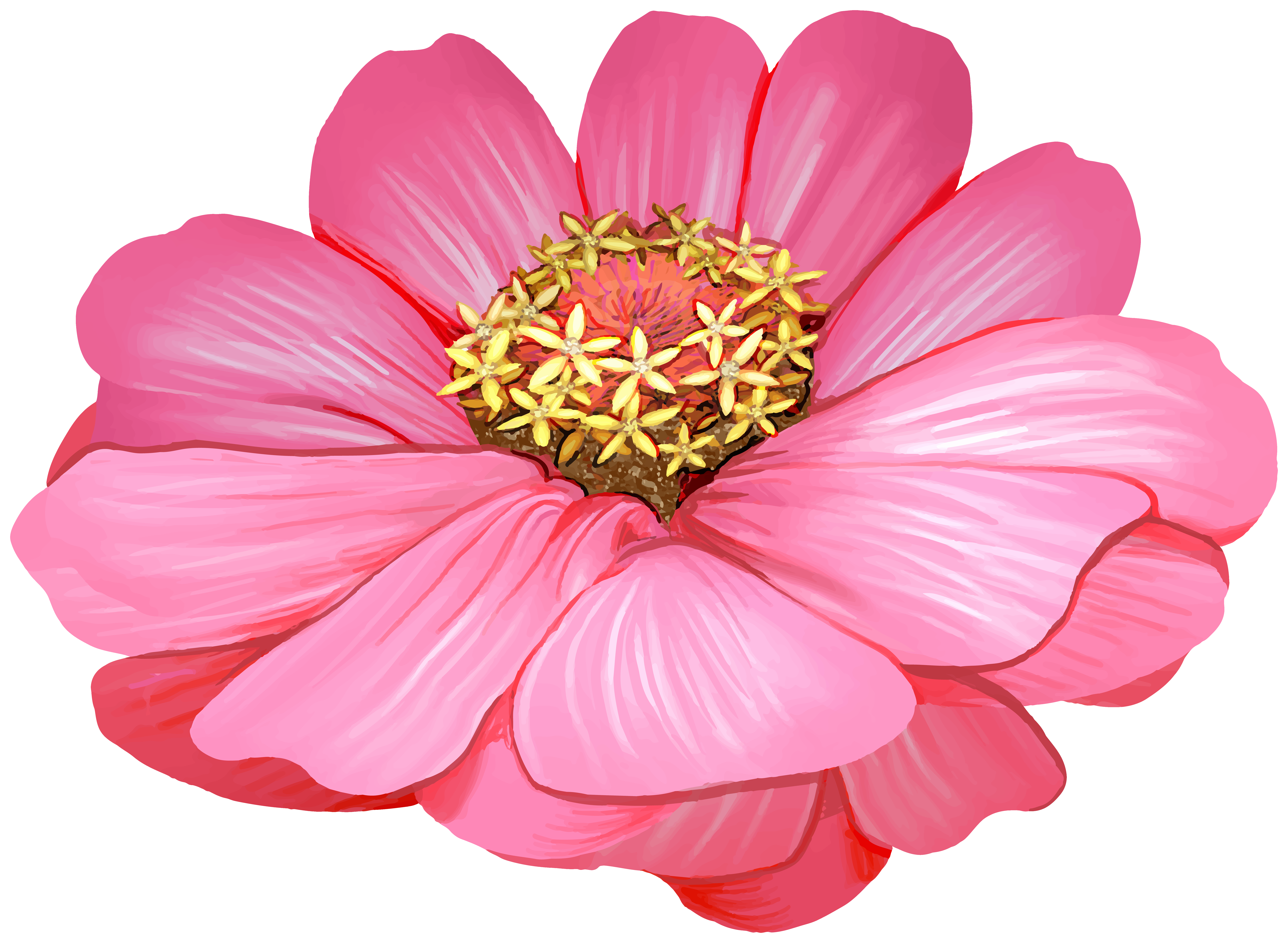 Pink Zinnia Flower Transparent Image.
