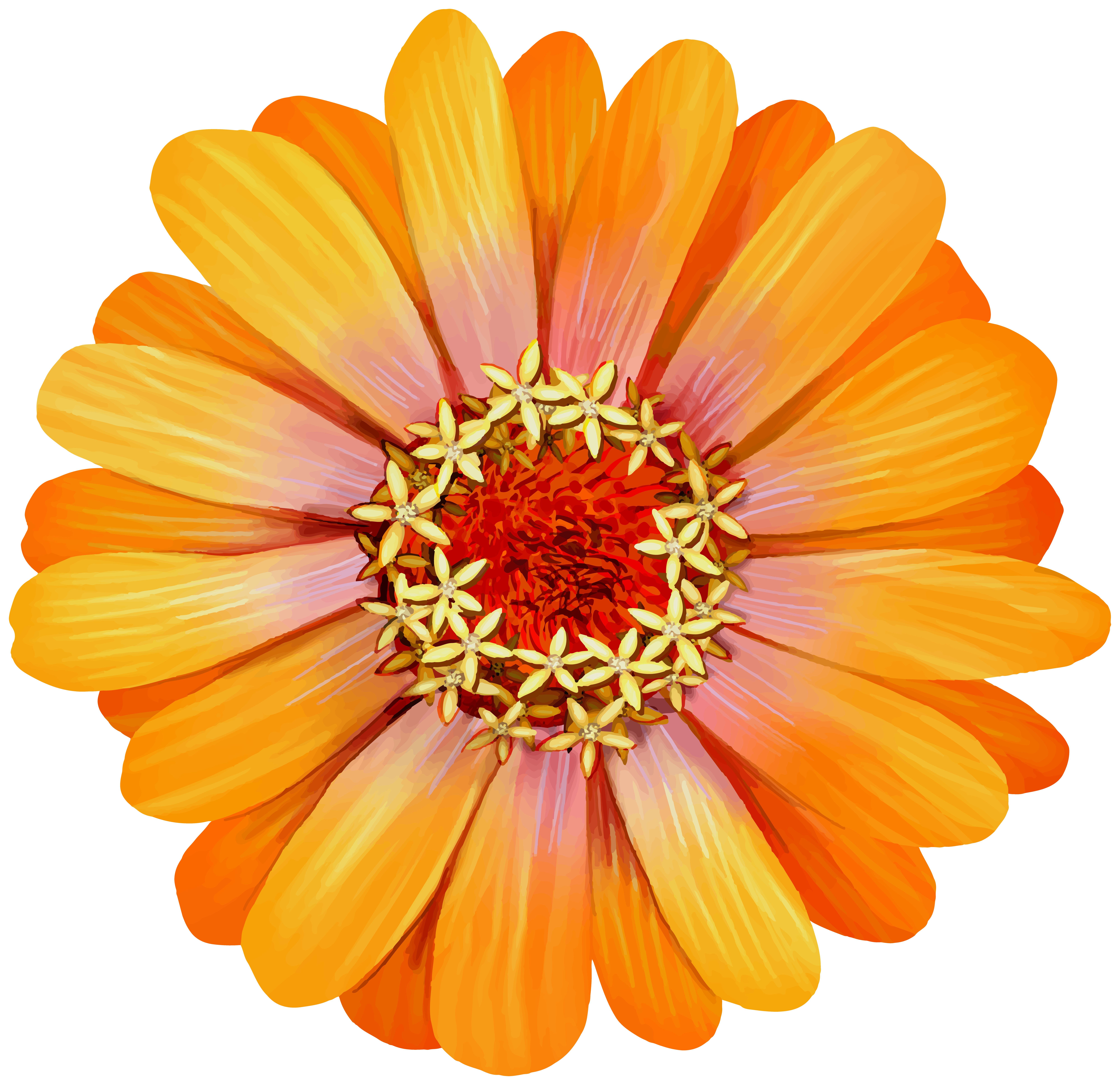 Orange Zinnia Flower Transparent Image.